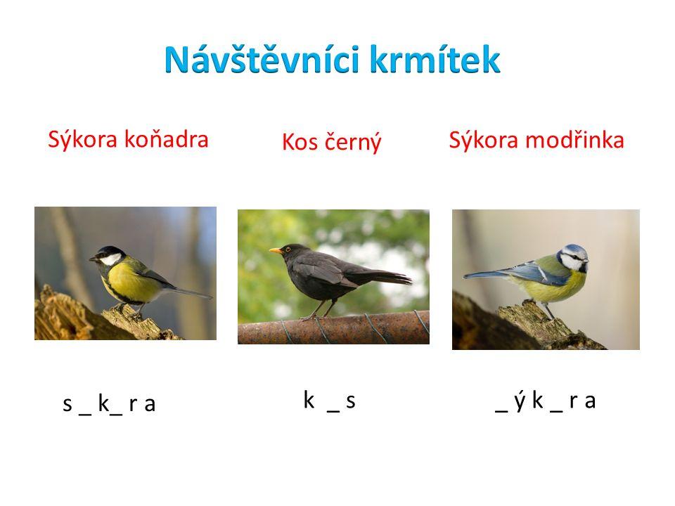 k _ s s _ k_ r a Sýkora koňadra Kos černý Sýkora modřinka _ ý k _ r a