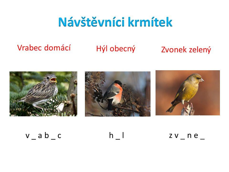 v _ a b _ ch _ l z v _ n e _ Vrabec domácí Hýl obecný Zvonek zelený