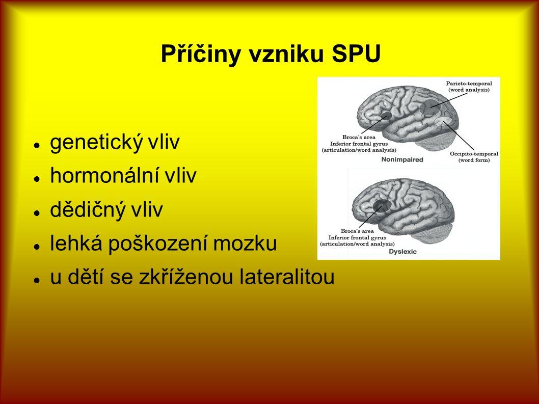 Příčiny vzniku SPU genetický vliv hormonální vliv dědičný vliv lehká poškození mozku u dětí se zkříženou lateralitou
