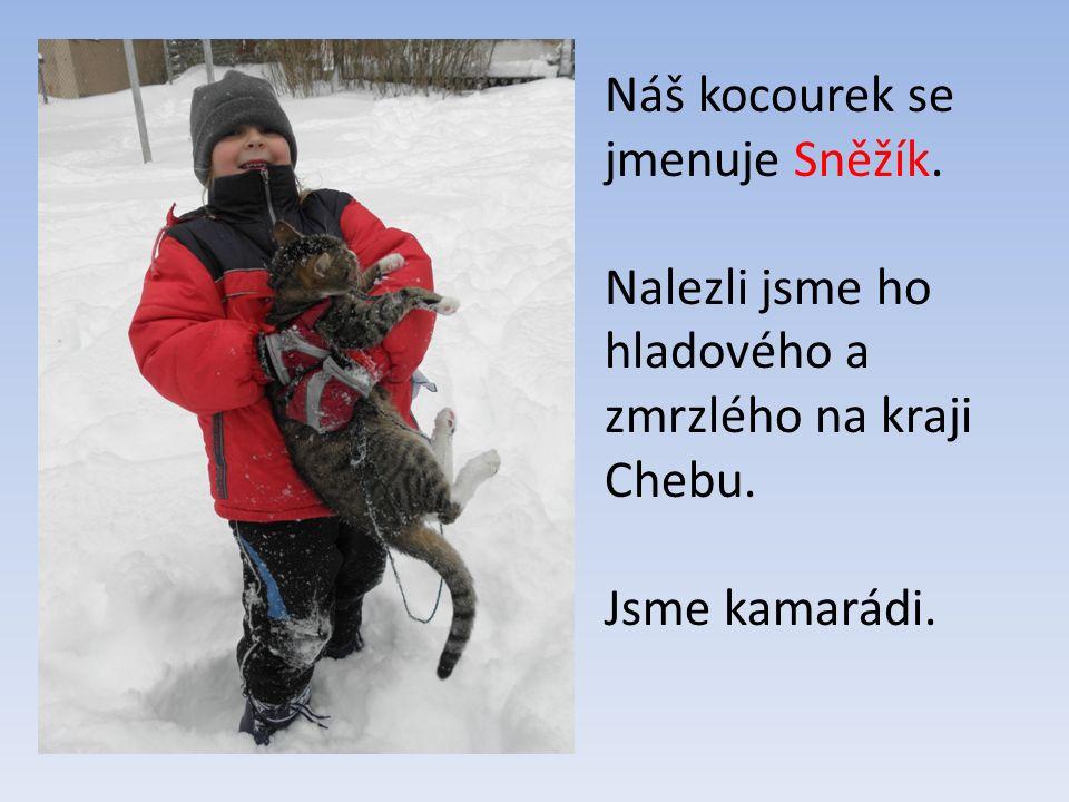 Náš kocourek se jmenuje Sněžík. Nalezli jsme ho hladového a zmrzlého na kraji Chebu. Jsme kamarádi.