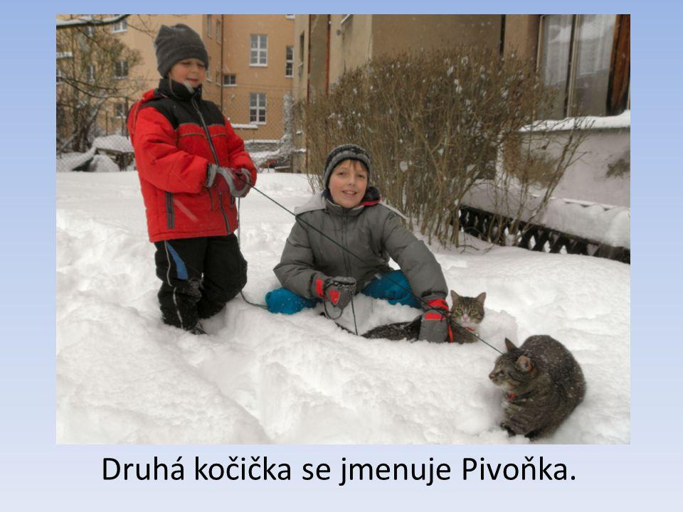 Druhá kočička se jmenuje Pivoňka.