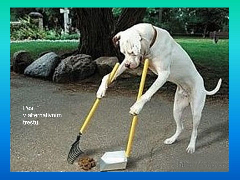 Pes v alternativním trestu