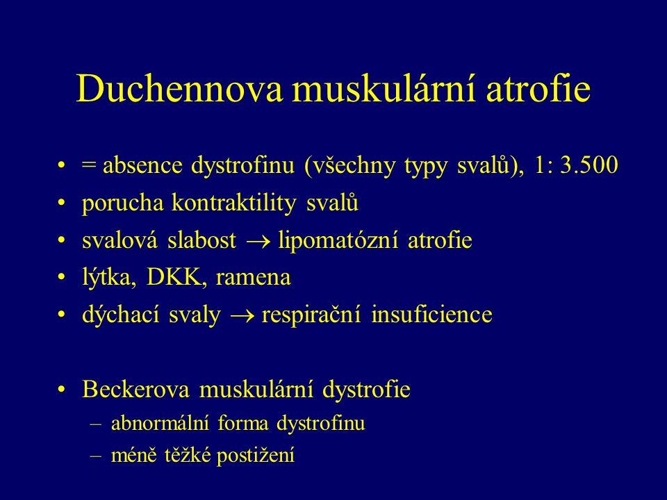 Duchennova muskulární atrofie = absence dystrofinu (všechny typy svalů), 1: 3.500 porucha kontraktility svalů svalová slabost  lipomatózní atrofie lýtka, DKK, ramena dýchací svaly  respirační insuficience Beckerova muskulární dystrofie –abnormální forma dystrofinu –méně těžké postižení