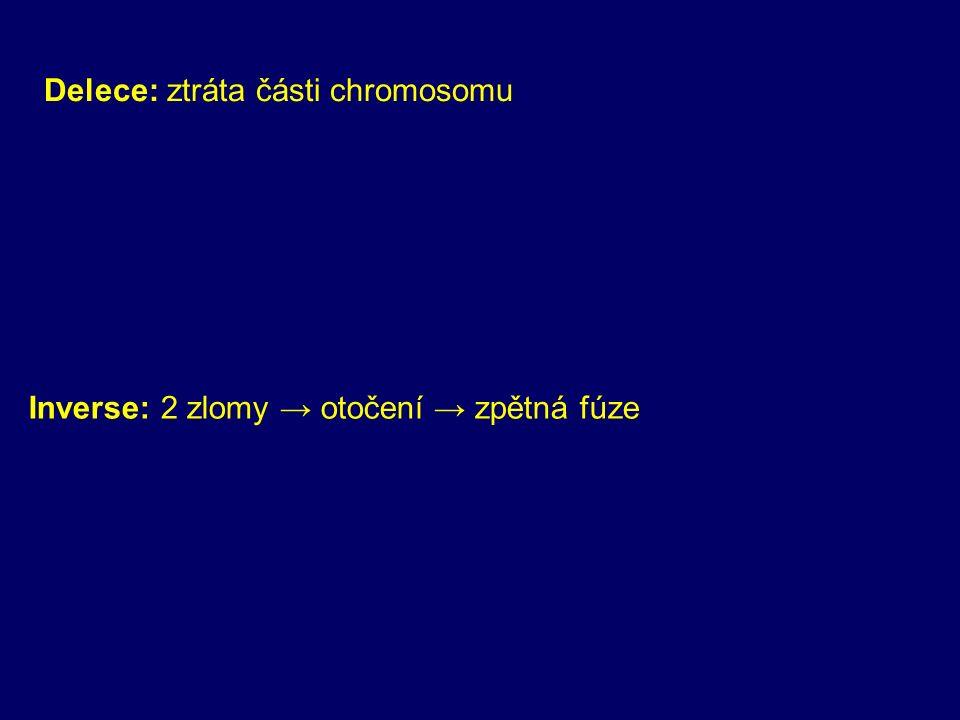 Delece: ztráta části chromosomu Inverse: 2 zlomy → otočení → zpětná fúze