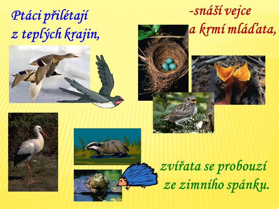 Ptáci přilétají z teplých krajin, -snáší vejce a krmí mláďata, zvířata se probouzí ze zimního spánku.