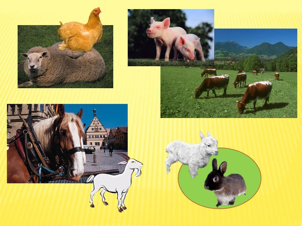 Jak patří zvířata k sobě.