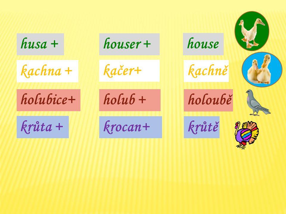 husa + kachna + houser + house kachně kačer+ holubice+ holoubě holub + krůta + krůtě krocan+