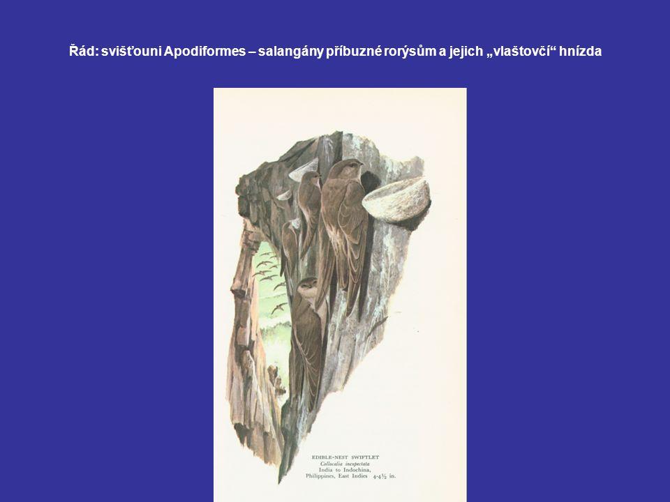 Populační gradace populace myšice lesní (Apodemus flavicollis) a norníka rudého (Clethrionomys glareolus) v závislosti na dozrávání semen