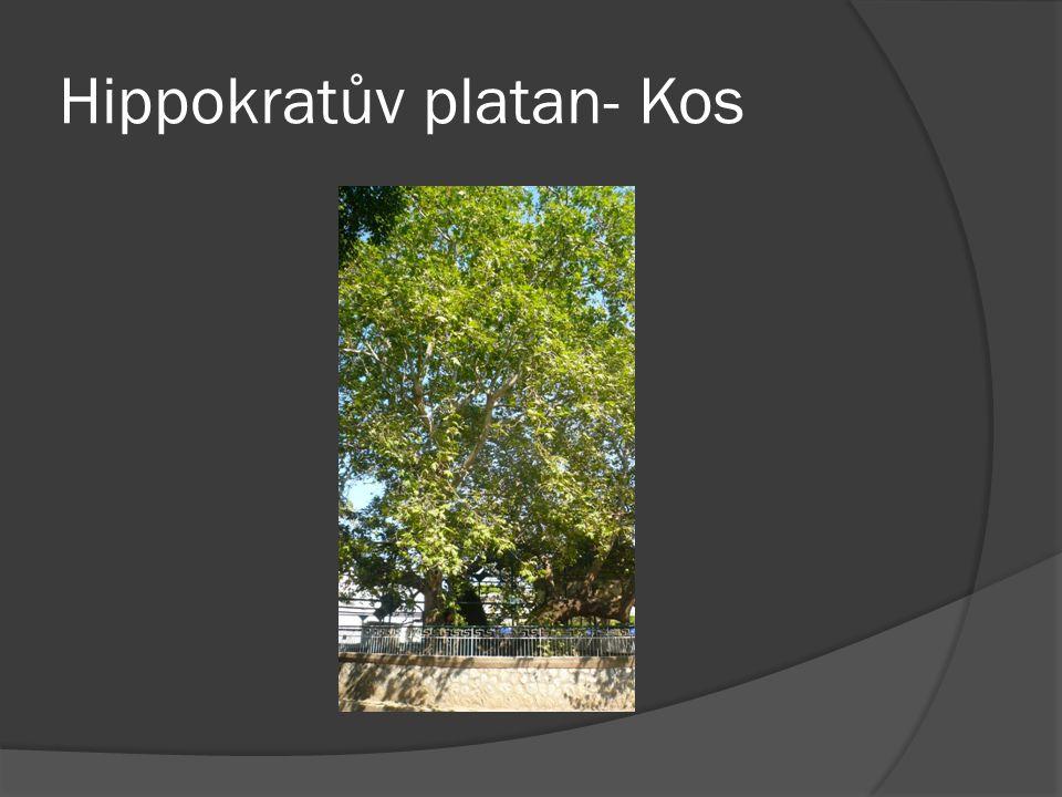 Hippokratův platan- Kos