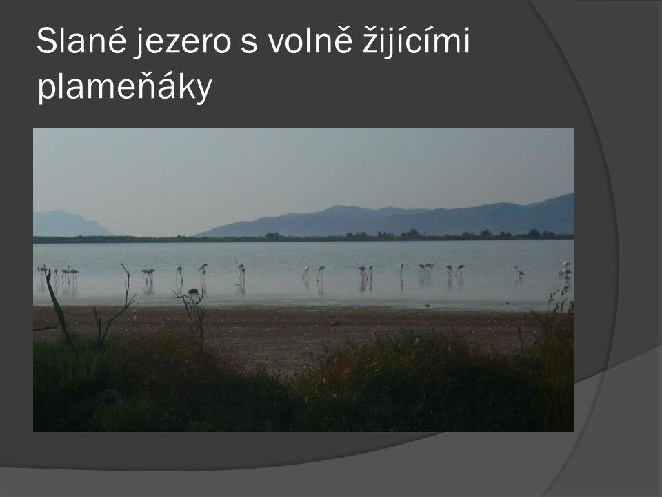 Slané jezero s volně žijícími plameňáky