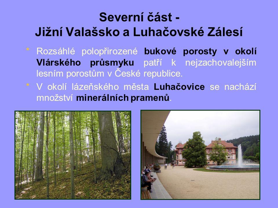 Severní část - Jižní Valašsko a Luhačovské Zálesí *Rozsáhlé polopřirozené bukové porosty v okolí Vlárského průsmyku patří k nejzachovalejším lesním po