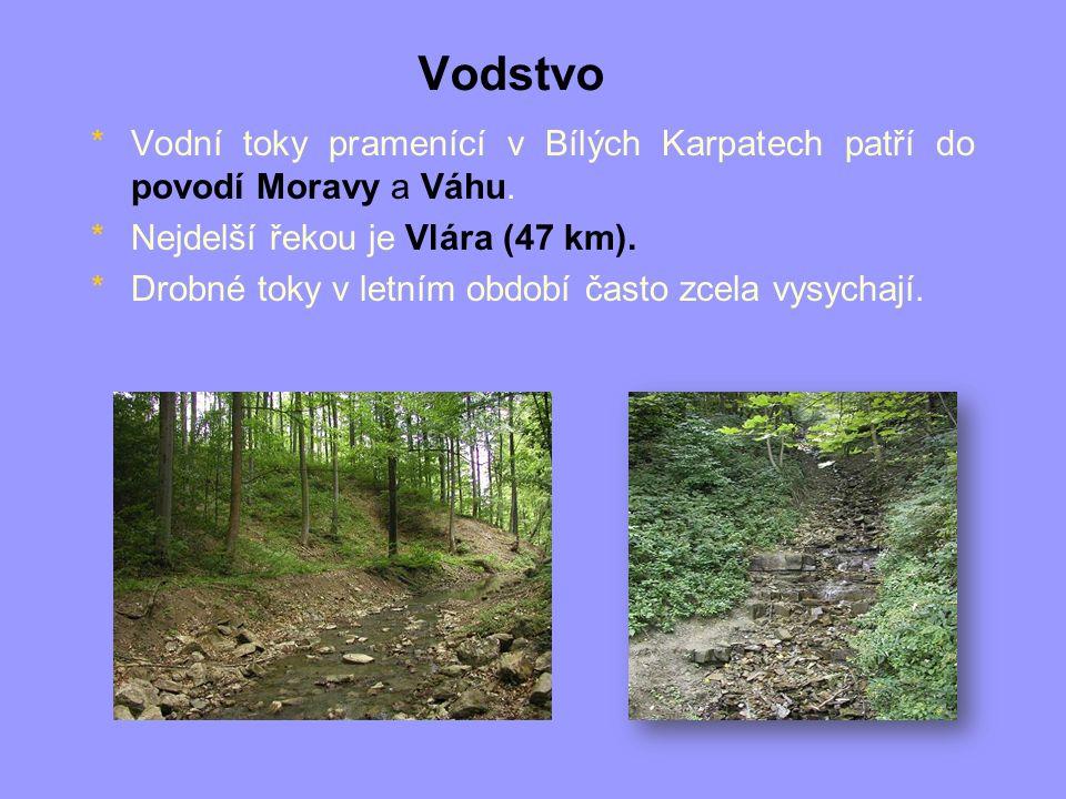Vodstvo *Vodní toky pramenící v Bílých Karpatech patří do povodí Moravy a Váhu. *Nejdelší řekou je Vlára (47 km). *Drobné toky v letním období často z