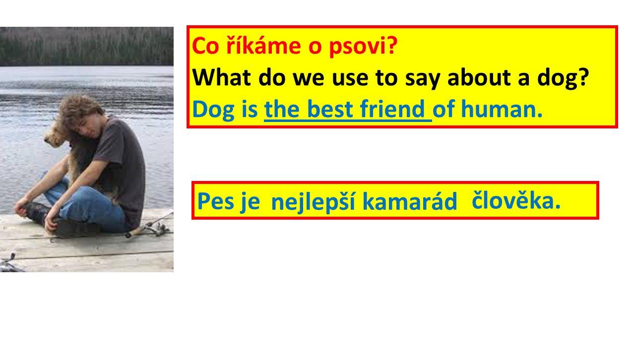 Pes je nejlepší kamarád člověka. Co říkáme o psovi.
