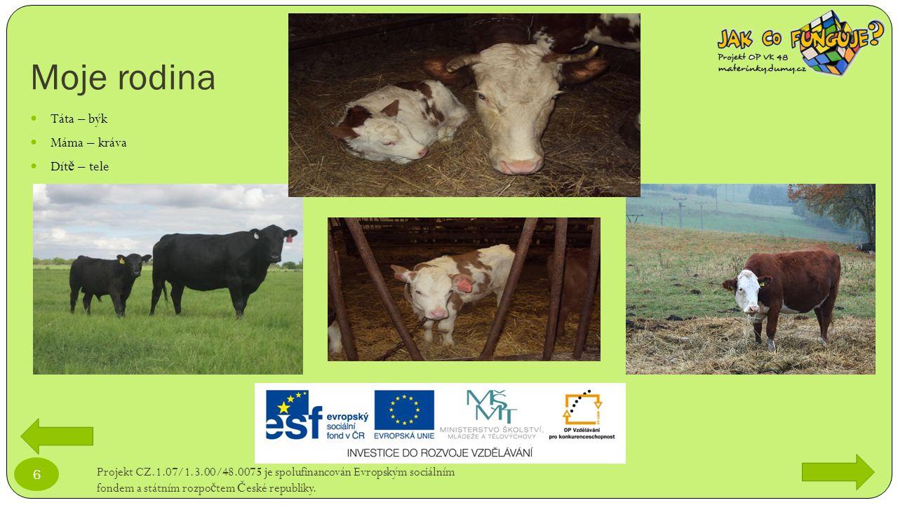 Co kráva nejí.