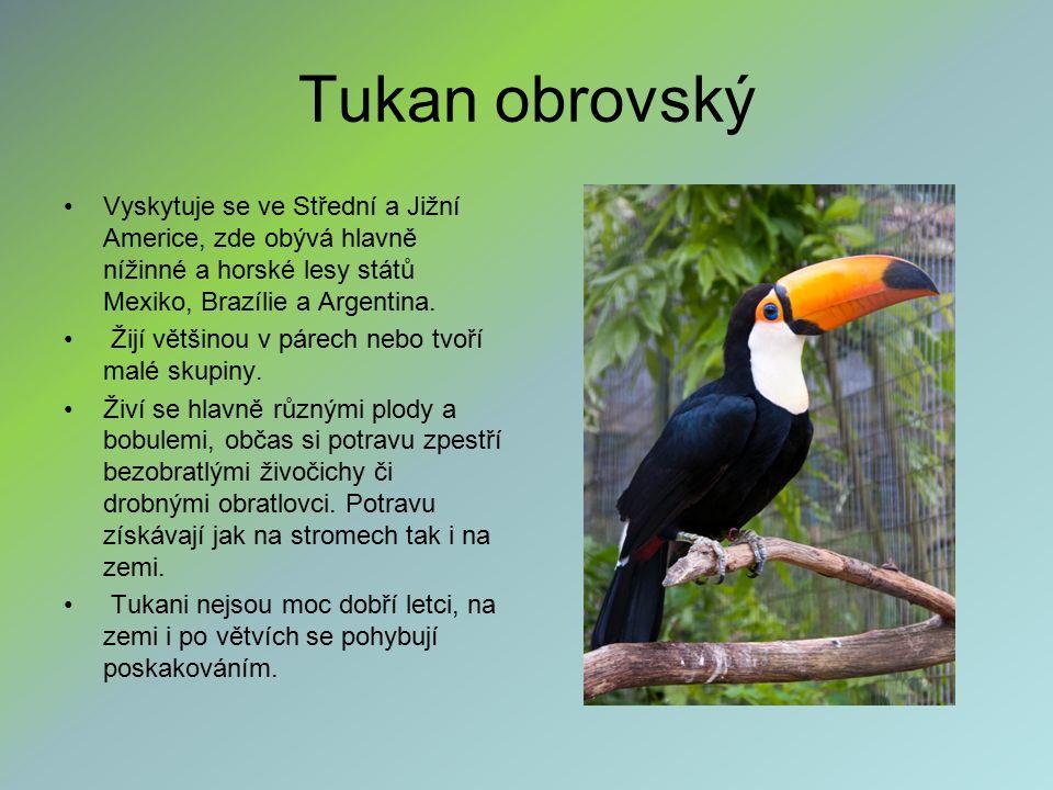 Tukan obrovský Vyskytuje se ve Střední a Jižní Americe, zde obývá hlavně nížinné a horské lesy států Mexiko, Brazílie a Argentina. Žijí většinou v pár