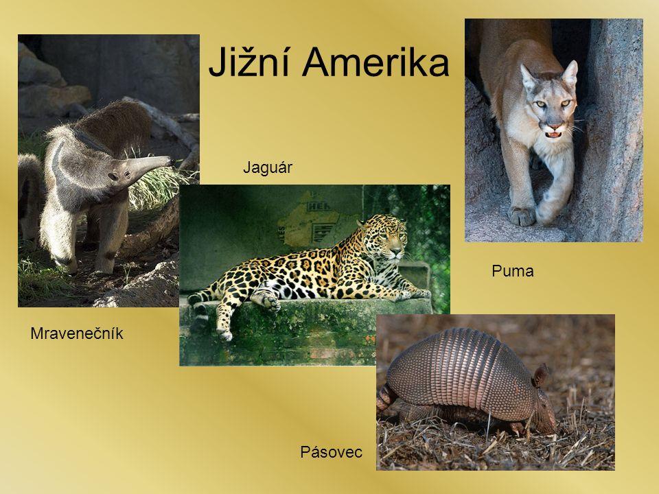 Jižní Amerika Mravenečník Puma Pásovec Jaguár