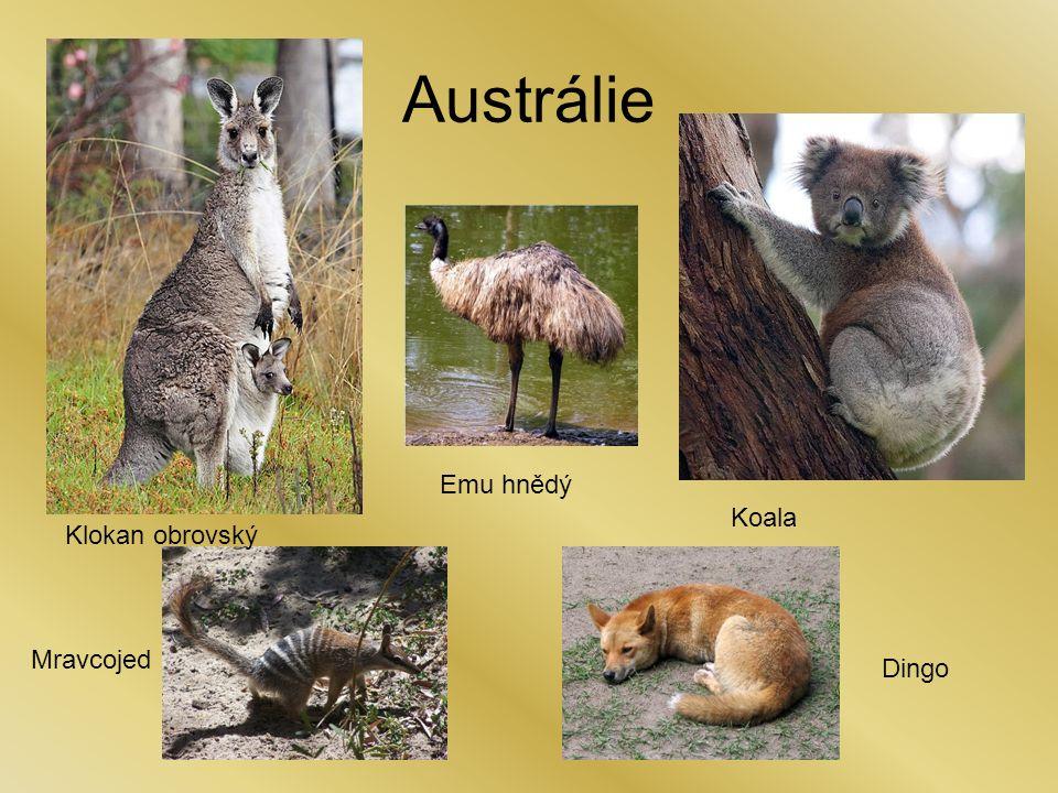 Austrálie Klokan obrovský Emu hnědý Mravcojed Koala Dingo