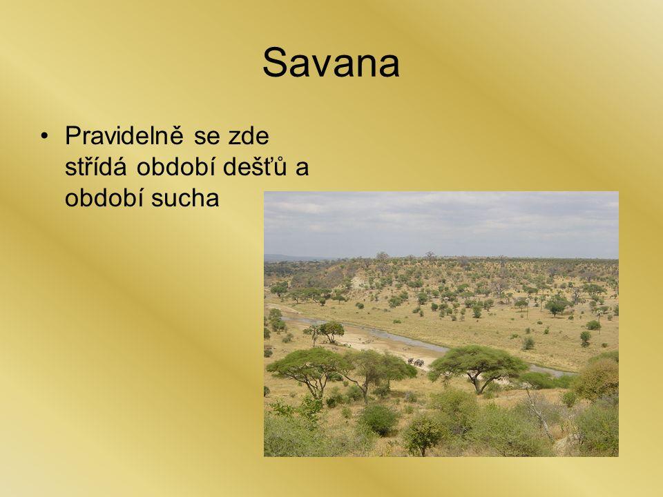 Savana Pravidelně se zde střídá období dešťů a období sucha