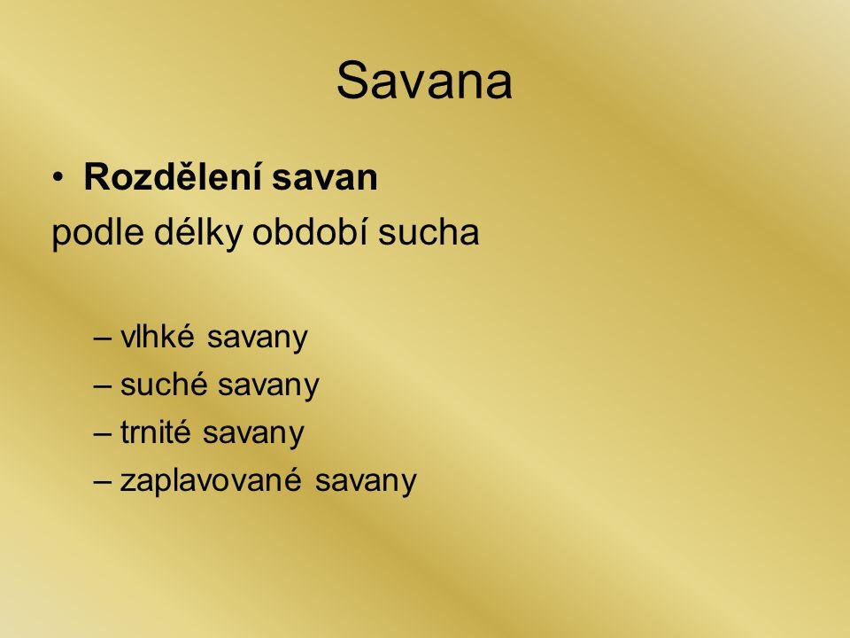 Savana Rozdělení savan podle délky období sucha –vlhké savany –suché savany –trnité savany –zaplavované savany