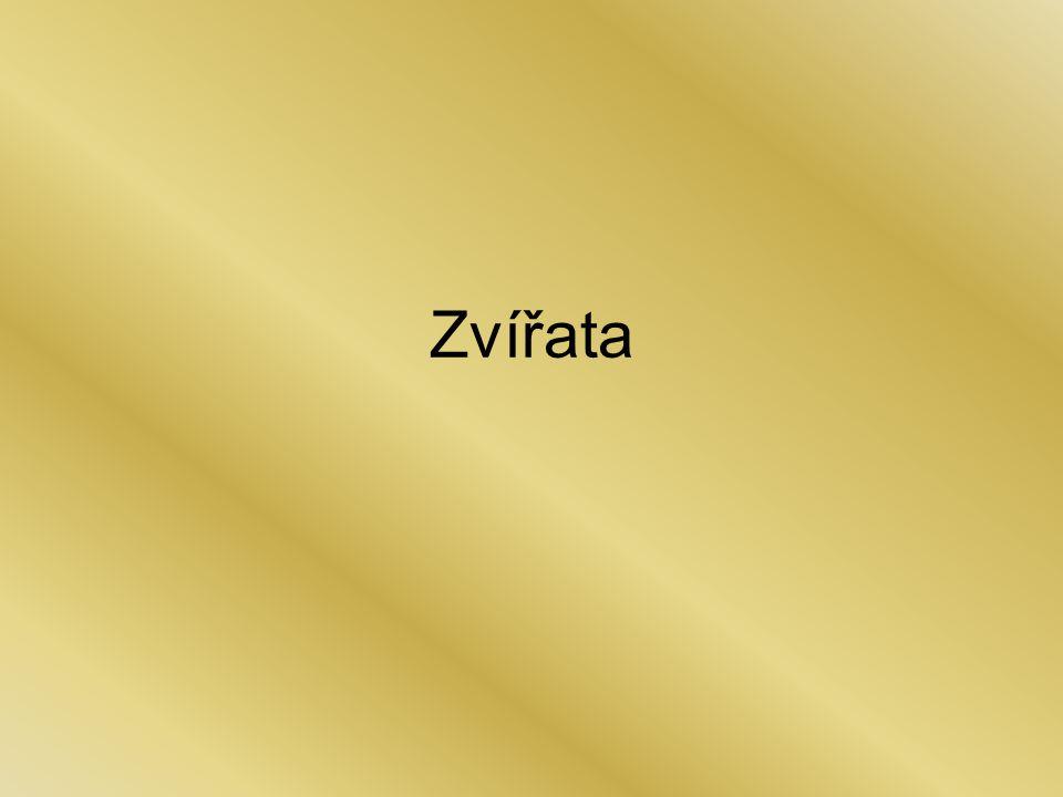 """Zebry jejich srst je charakteristicky bílo- černě pruhovaná (""""zebrovaná )."""