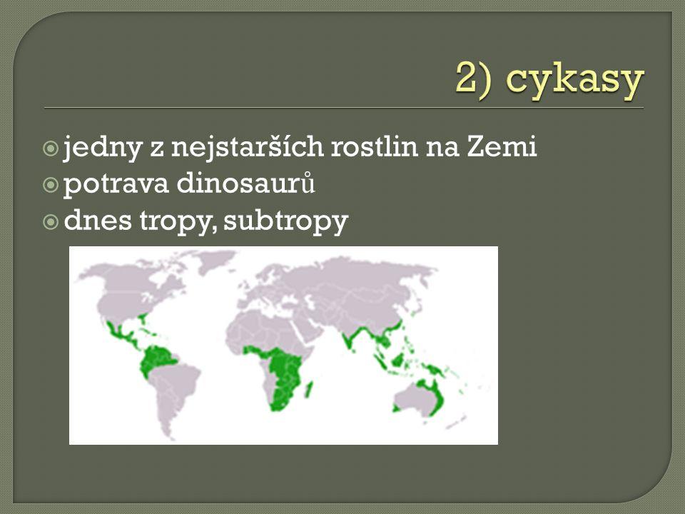 jedny z nejstarších rostlin na Zemi  potrava dinosaur ů  dnes tropy, subtropy