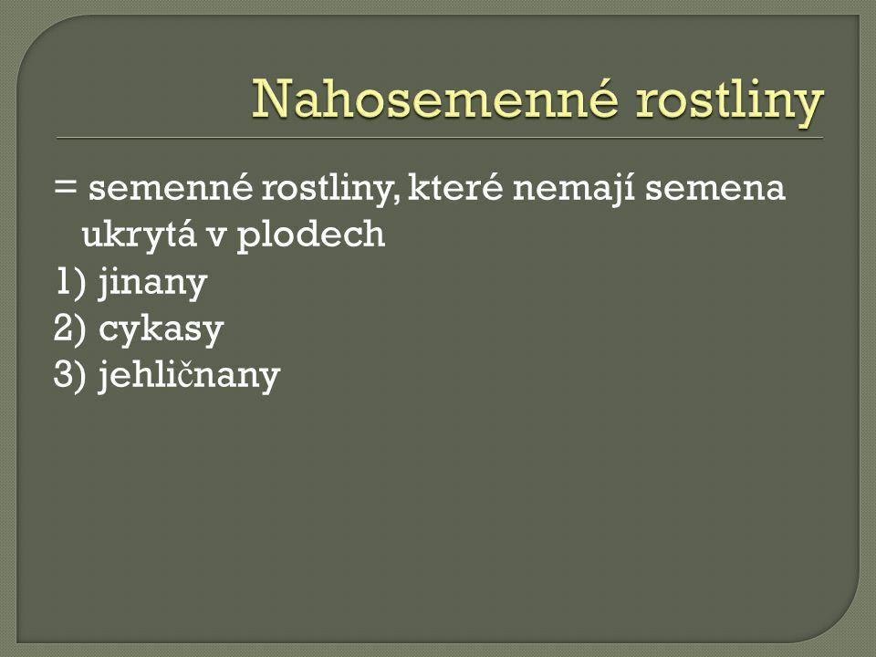 Cykas - Praha  PeregrinusX.wikipedia.cz [online].