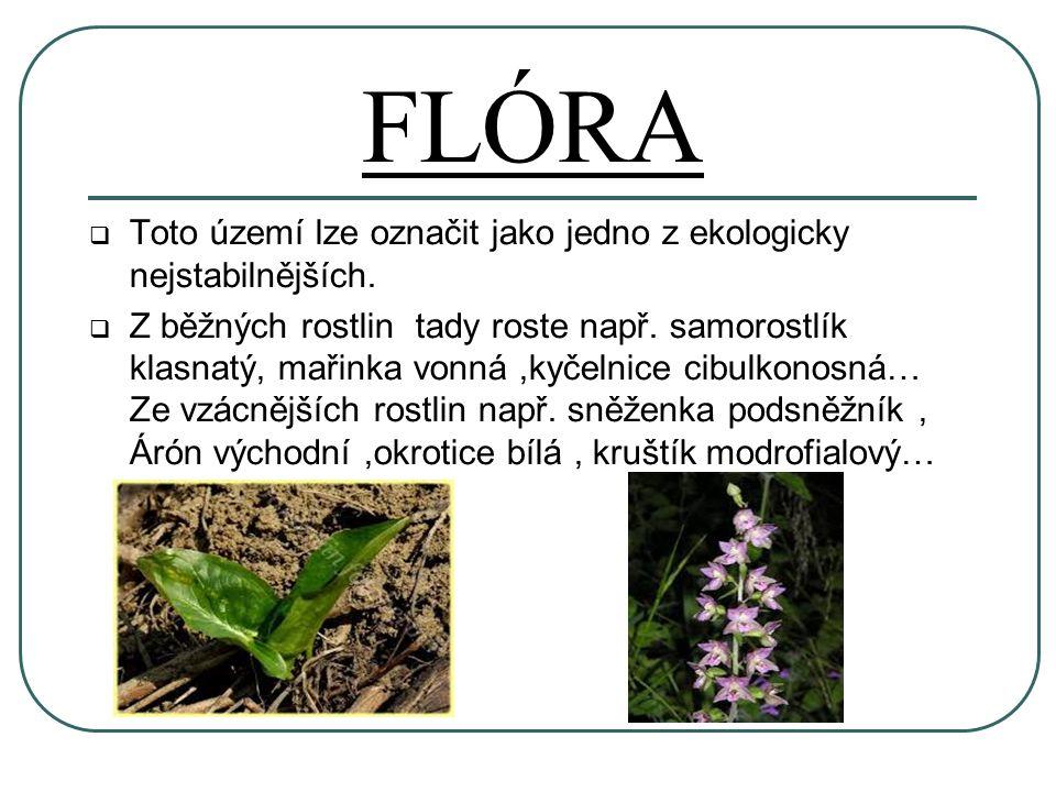 FLÓRA  Toto území lze označit jako jedno z ekologicky nejstabilnějších.