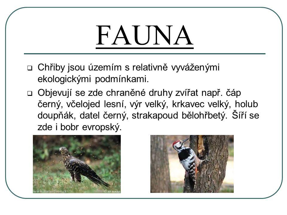 FAUNA  Chřiby jsou územím s relativně vyváženými ekologickými podmínkami.