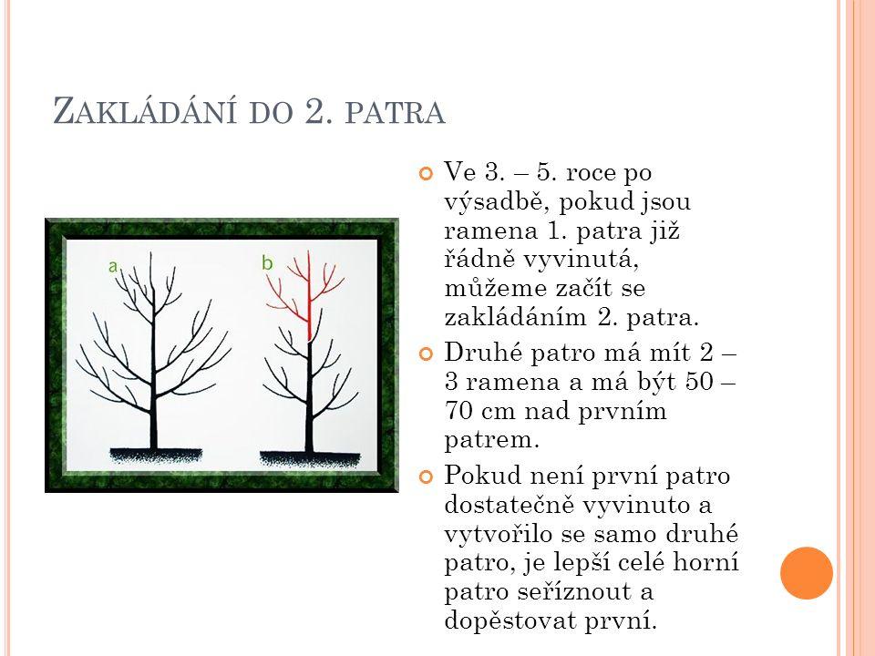 Z AKLÁDÁNÍ DO 2. PATRA Ve 3. – 5. roce po výsadbě, pokud jsou ramena 1.