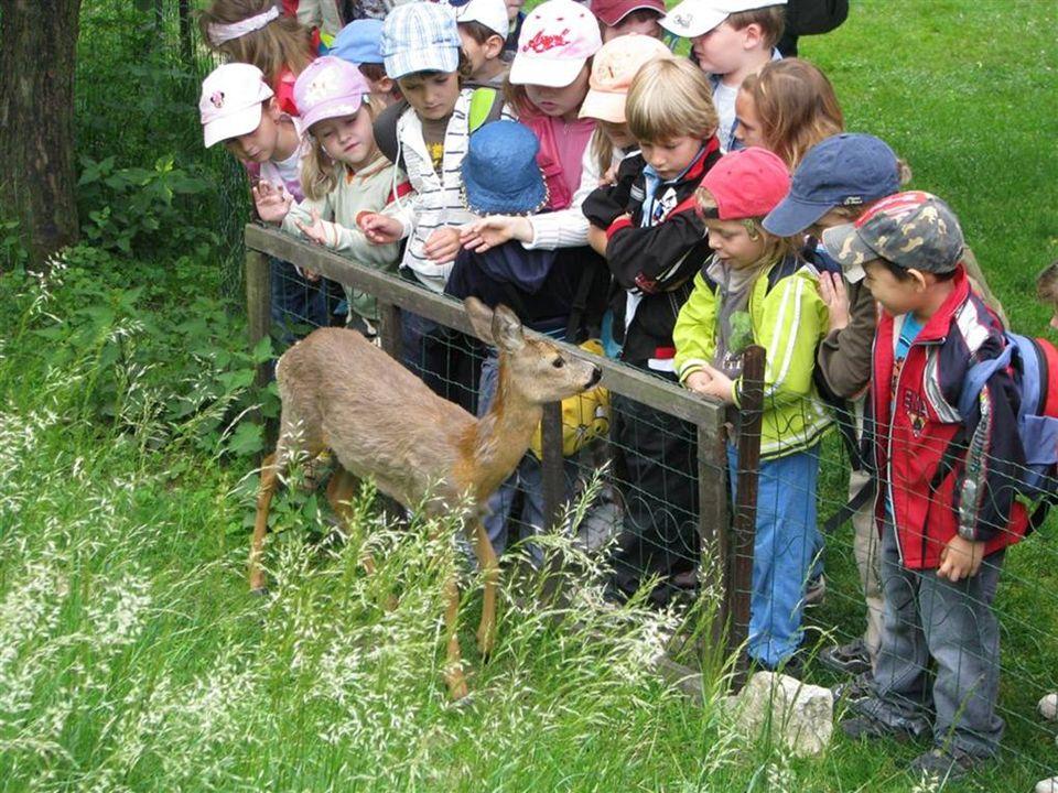 Ve venkovním výběhu, se setkáte s čápy, volavkou, husami i srnčetem.