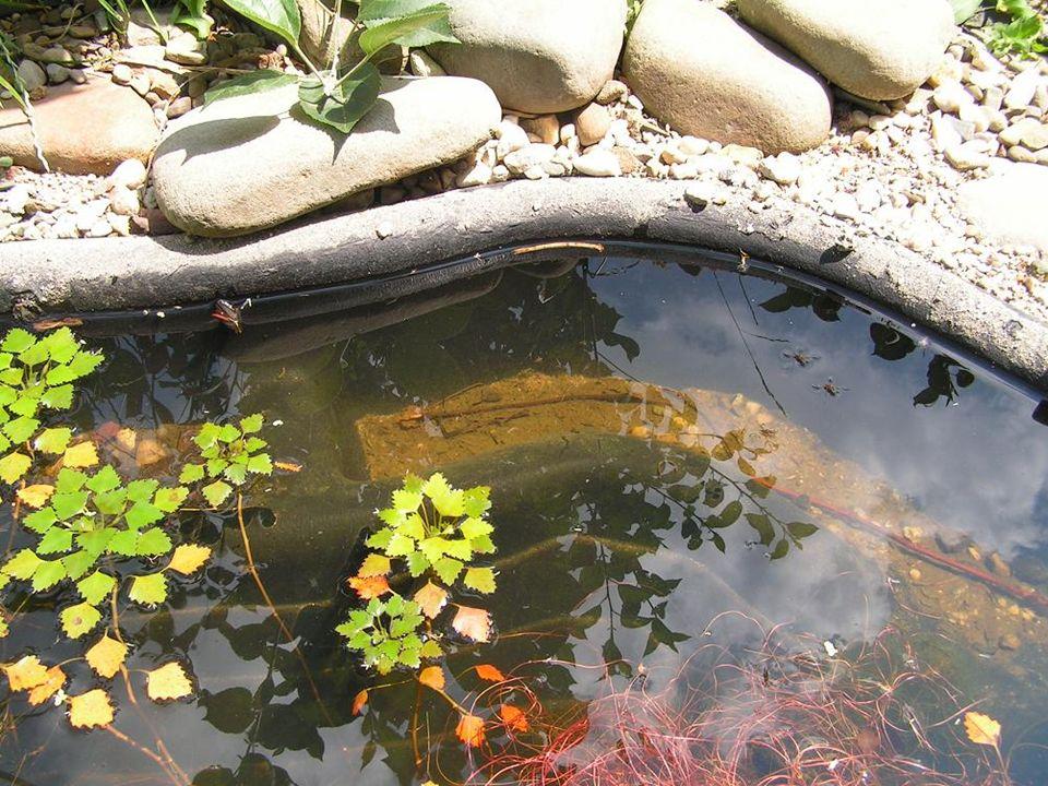 Na závěr nahlédneme do Živé zahrady, kde najdeme vodní a bahenní rostliny v jezírku, Na závěr nahlédneme do Živé zahrady, kde najdeme vodní a bahenní rostliny v jezírku, Živá příroda nadosah