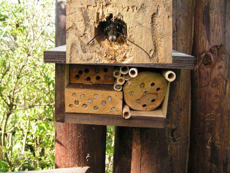 hmyz osidlující připravený hotel hmyz osidlující připravený hotel Živá příroda nadosah