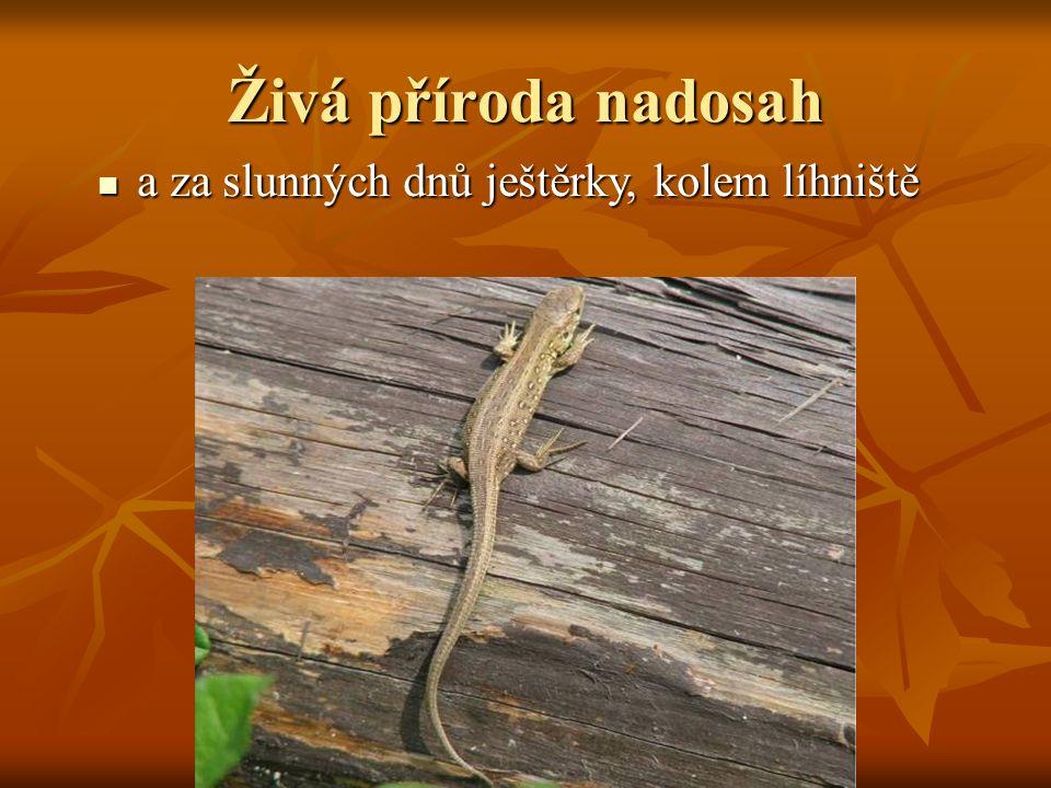 a za slunných dnů ještěrky, kolem líhniště a za slunných dnů ještěrky, kolem líhniště Živá příroda nadosah