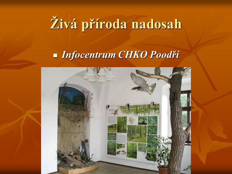 """Ve stálé expozici: """"Příroda a lidé , se na panelech a trojrozměrných exponátech, seznámíte, s krajinou rostlinami i zvířaty chráněné krajinné oblasti."""