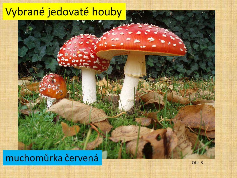 Vybrané jedovaté houby Obr. 3 muchomůrka červená