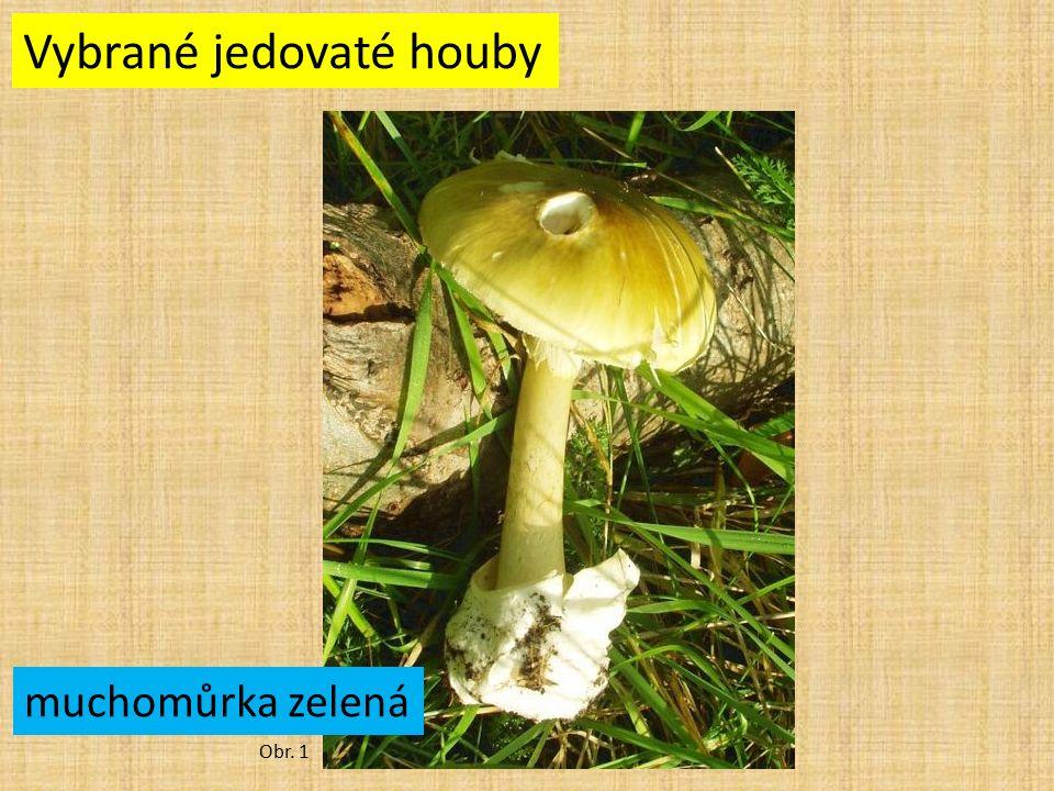 Vybrané jedovaté houby Obr. 1 muchomůrka zelená