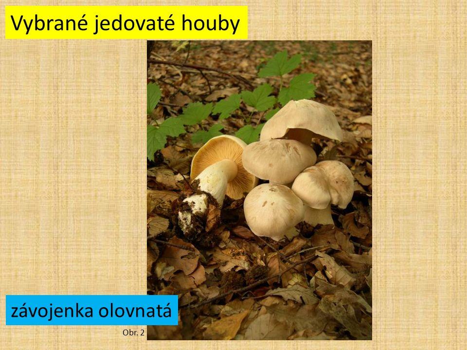 Vybrané jedovaté houby Obr. 2 závojenka olovnatá