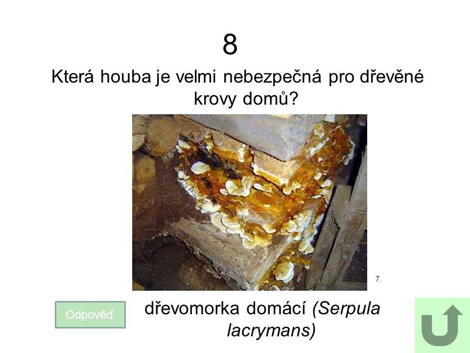8 Která houba je velmi nebezpečná pro dřevěné krovy domů? 7. Odpověď dřevomorka domácí (Serpula lacrymans)