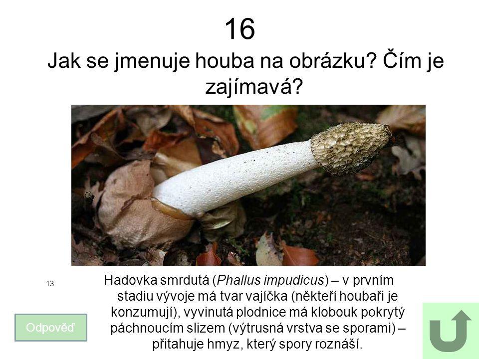 16 Jak se jmenuje houba na obrázku. Čím je zajímavá.