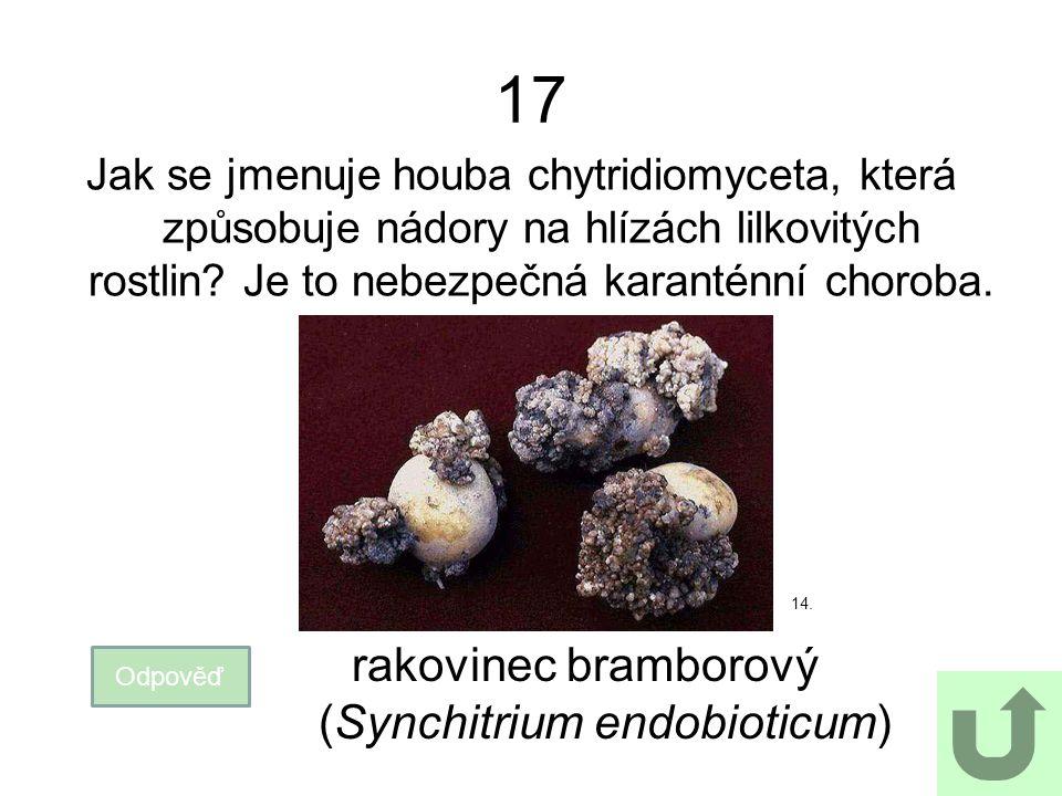 17 Jak se jmenuje houba chytridiomyceta, která způsobuje nádory na hlízách lilkovitých rostlin.