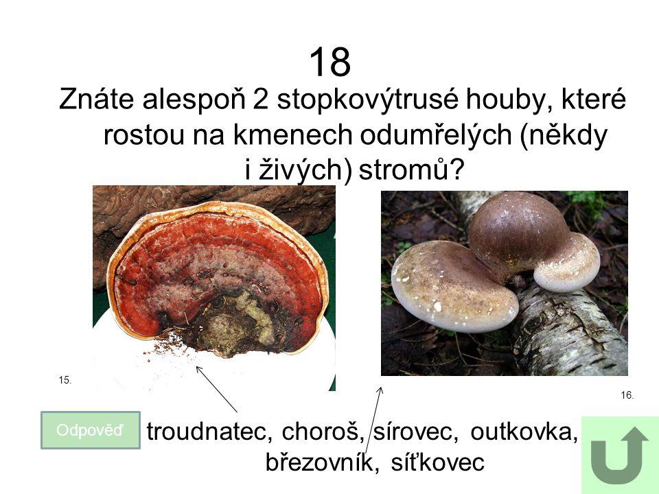 18 Znáte alespoň 2 stopkovýtrusé houby, které rostou na kmenech odumřelých (někdy i živých) stromů? Odpověď troudnatec, choroš, sírovec, outkovka, bře