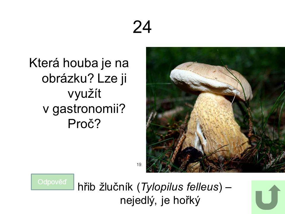 24 Která houba je na obrázku? Lze ji využít v gastronomii? Proč? Odpověď hřib žlučník (Tylopilus felleus) – nejedlý, je hořký 19.
