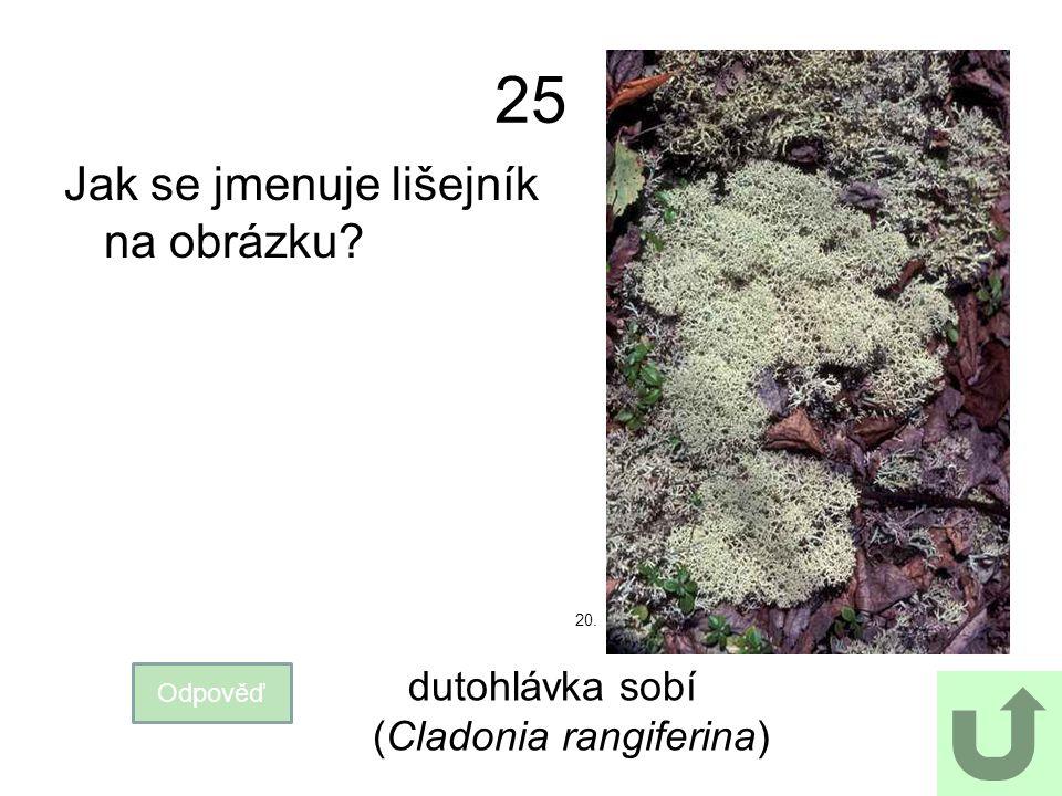 25 Jak se jmenuje lišejník na obrázku Odpověď dutohlávka sobí (Cladonia rangiferina) 20.