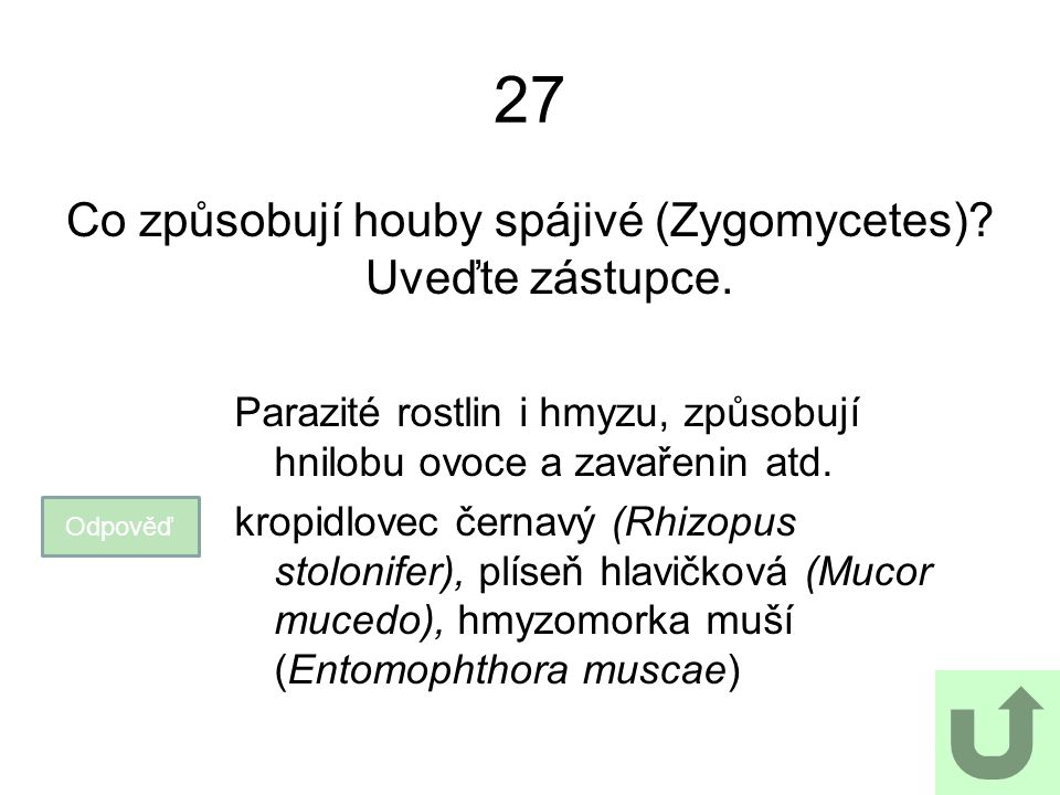 27 Co způsobují houby spájivé (Zygomycetes)? Uveďte zástupce. Odpověď Parazité rostlin i hmyzu, způsobují hnilobu ovoce a zavařenin atd. kropidlovec č