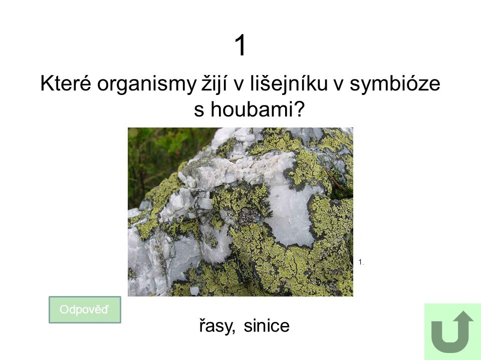 1 Které organismy žijí v lišejníku v symbióze s houbami? Odpověď 1. řasy, sinice