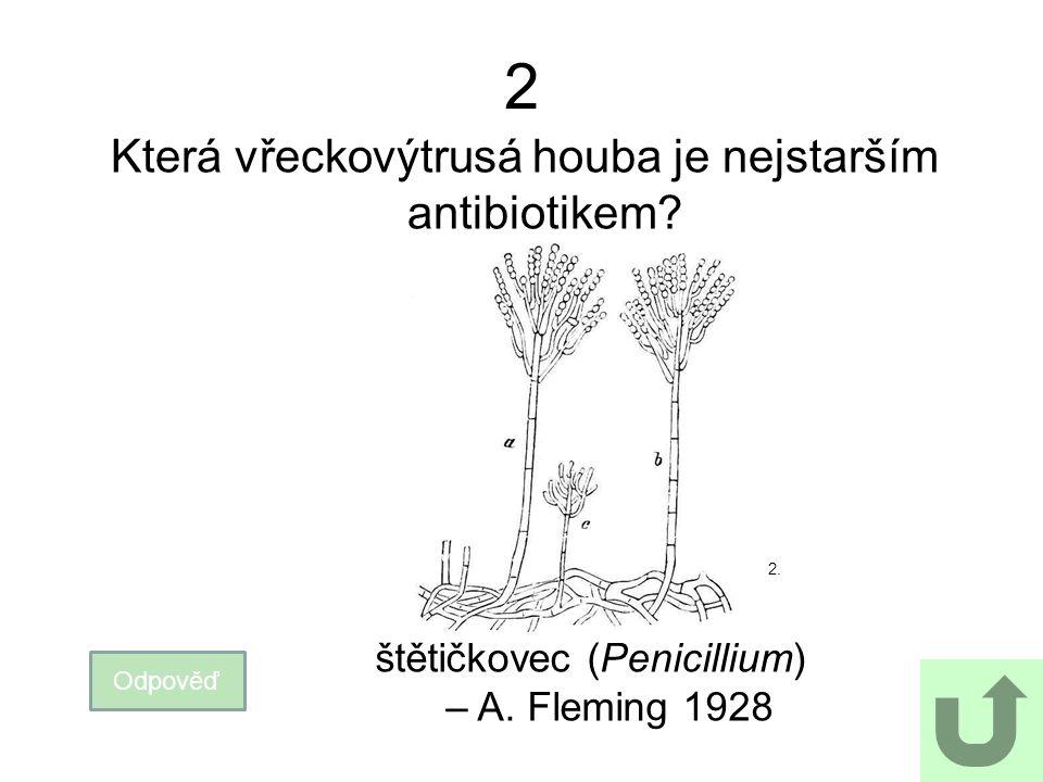 2 Která vřeckovýtrusá houba je nejstarším antibiotikem? Odpověď štětičkovec (Penicillium) – A. Fleming 1928 2.