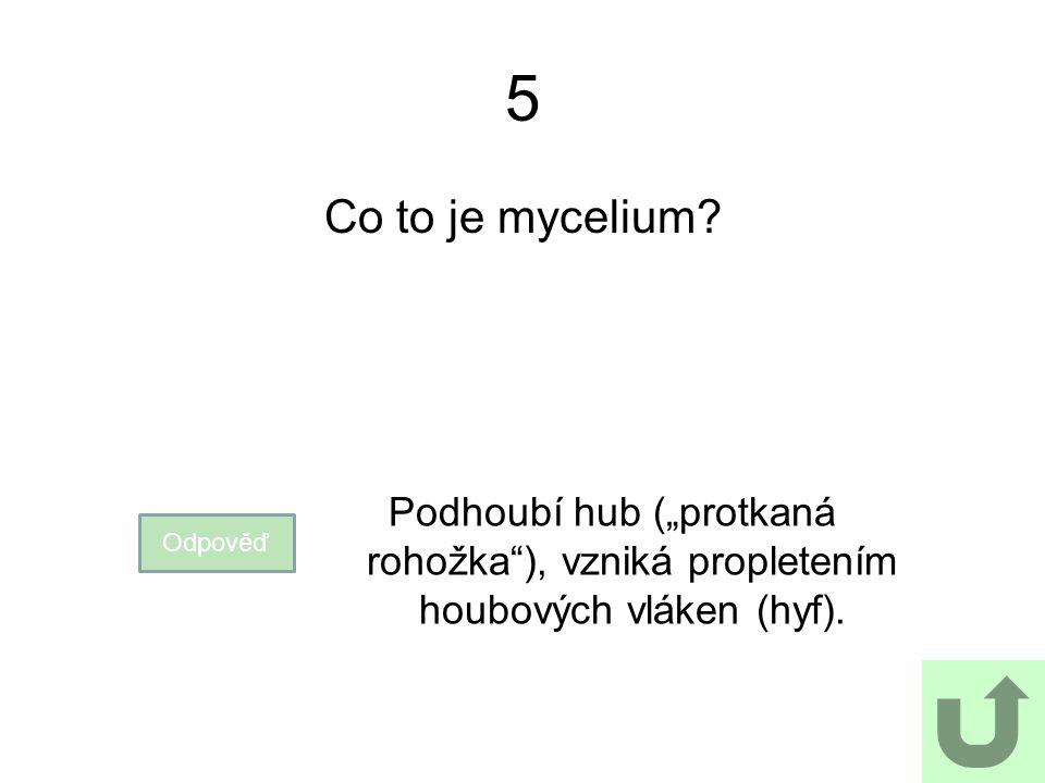 """5 Co to je mycelium? Odpověď Podhoubí hub (""""protkaná rohožka""""), vzniká propletením houbových vláken (hyf)."""