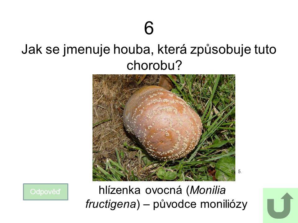 6 Jak se jmenuje houba, která způsobuje tuto chorobu? Odpověď hlízenka ovocná (Monilia fructigena) – původce moniliózy 5.