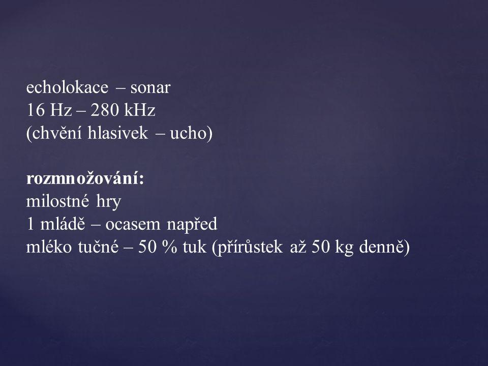 echolokace – sonar 16 Hz – 280 kHz (chvění hlasivek – ucho) rozmnožování: milostné hry 1 mládě – ocasem napřed mléko tučné – 50 % tuk (přírůstek až 50 kg denně)