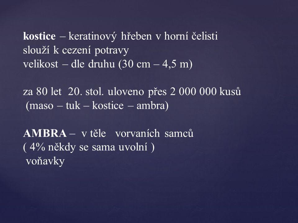kostice – keratinový hřeben v horní čelisti slouží k cezení potravy velikost – dle druhu (30 cm – 4,5 m) za 80 let 20.